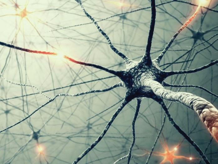 Neuron4.jpg