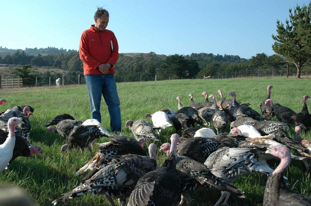 Bo Turkeys July 13 08 044.jpg