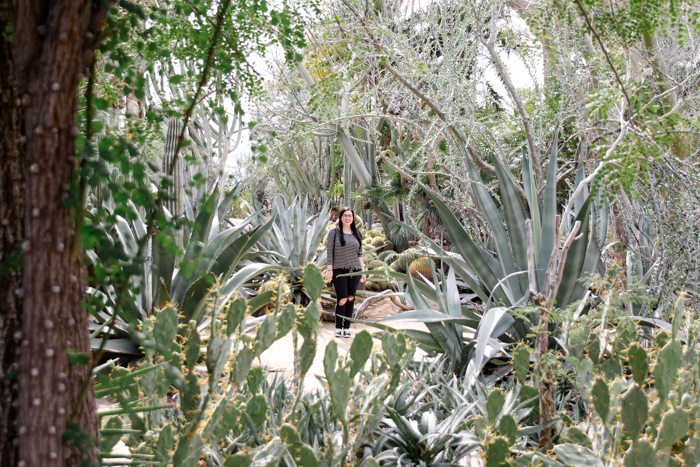 The World's First Cactarium Palm Springs