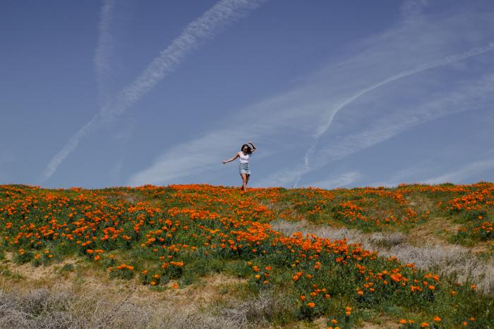 antelope valley poppy fields california