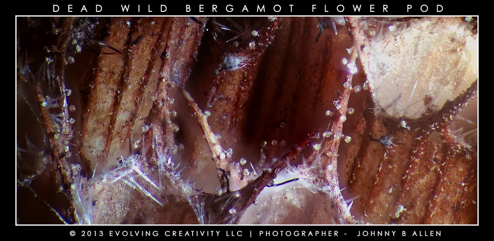 Example of Deep-Focus Micro Photography