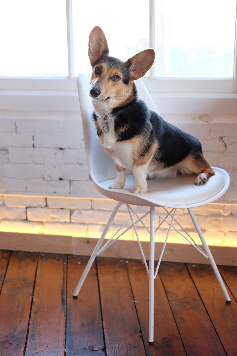 Selflessly Styled | pip the corgi