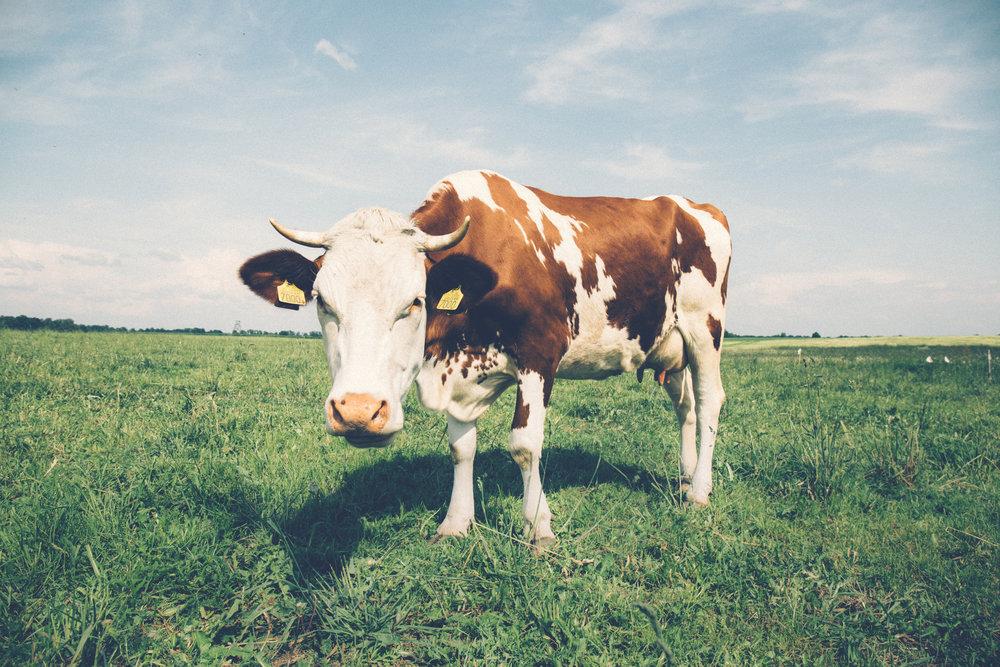 Holisticole - Dairy-Free Milk - Hemp Milk