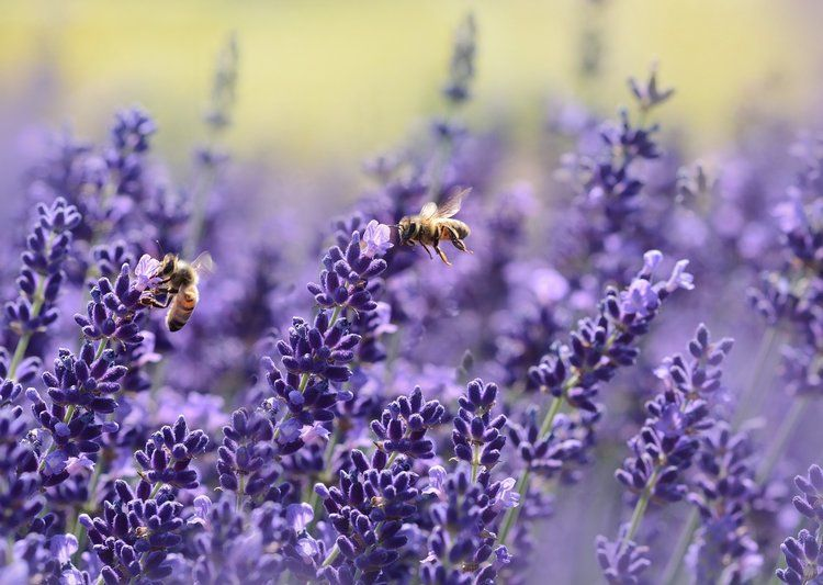 Holisticole Top 5 Reasons to Include Bee Pollen