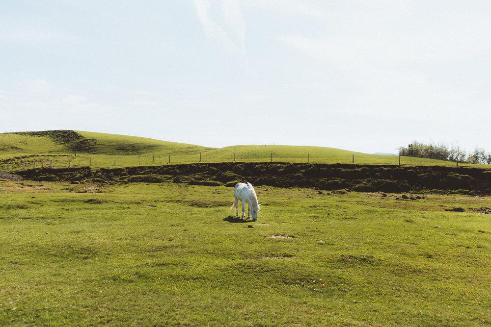 Iceland Day 3 - 04.jpg