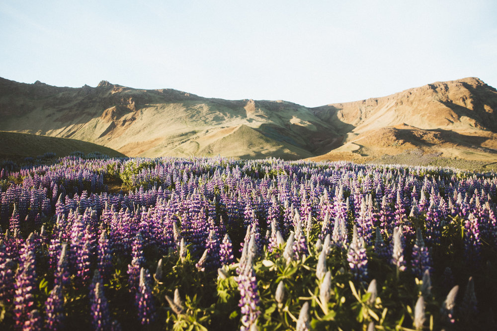 Iceland Day 3 - 41.jpg
