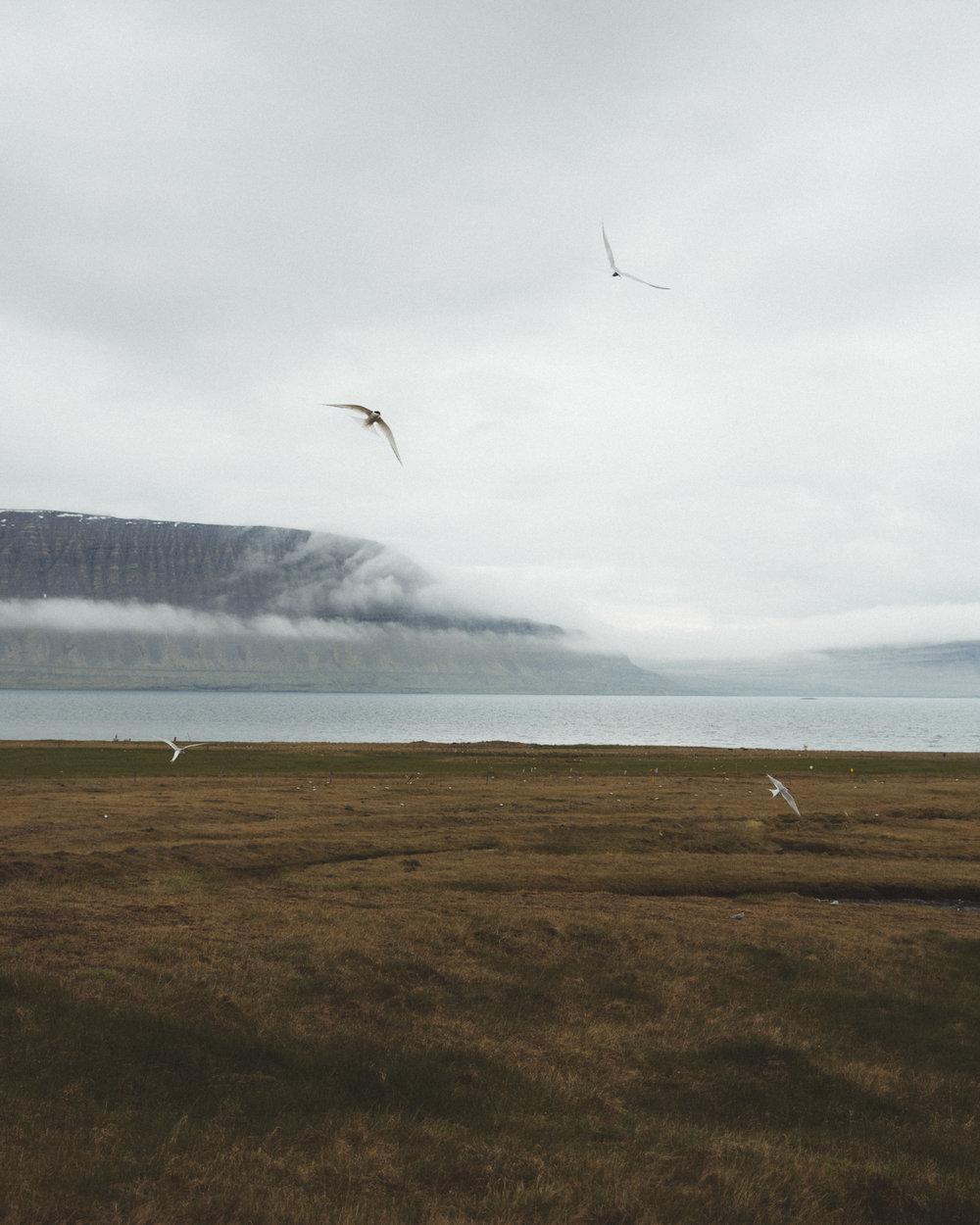 Iceland Day 7 - 07.jpg