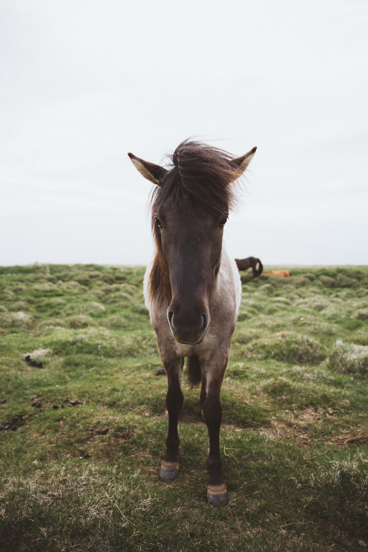 Iceland Day 8 - 04.jpg