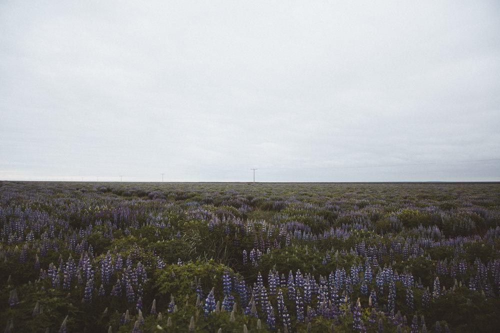 Iceland Day 10 - 02.jpg