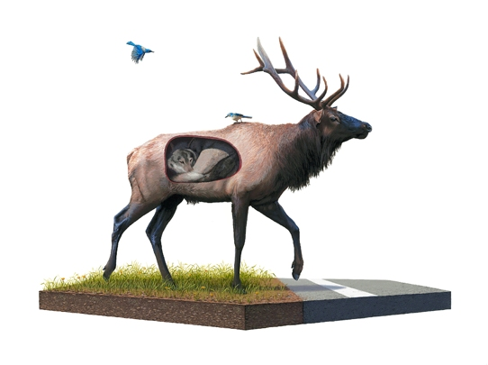 JOSH KEYES |   Incubate   Giclee | Edition: 50 | 24 x 18 | Signed and Numbered