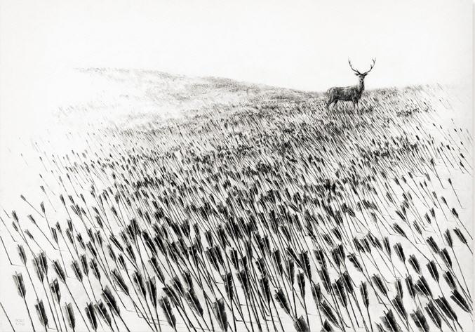 Pejac - Meadow.jpg
