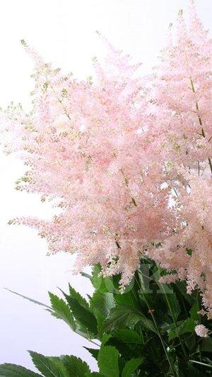 Top 10 filler flowers to know ebb flow flowers 2 mightylinksfo