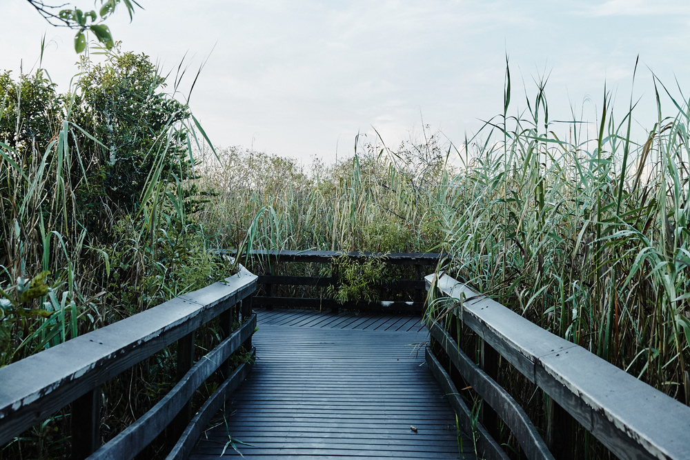 IN PICTURES A VISUAL DIARY OF THE EVERGLADES.