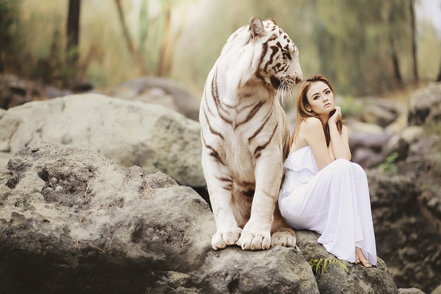 Tiger focus.