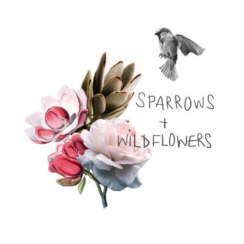 sparrows wildflowers.jpg