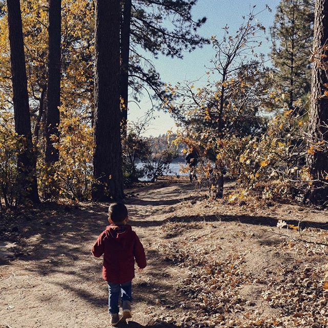 Into the woods. 🍃✨ . . . #photography #photoshoot #familyphotography #toddler #letthembelittle #family #fall #forest #lake #adventure