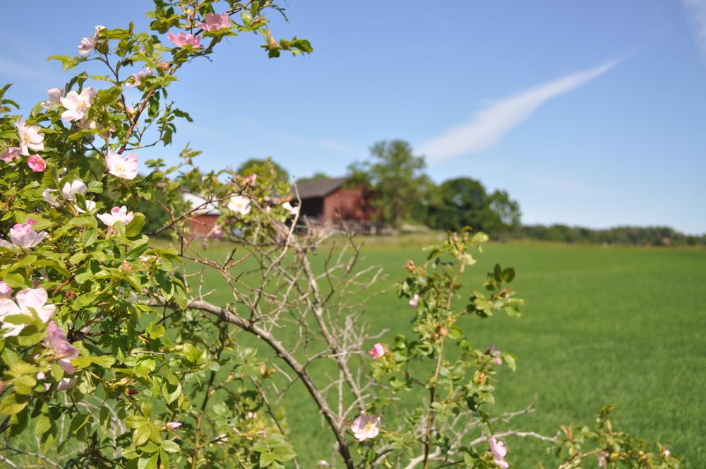 Gott om gamla gårdar och tomter   Bygg här    Läs mer