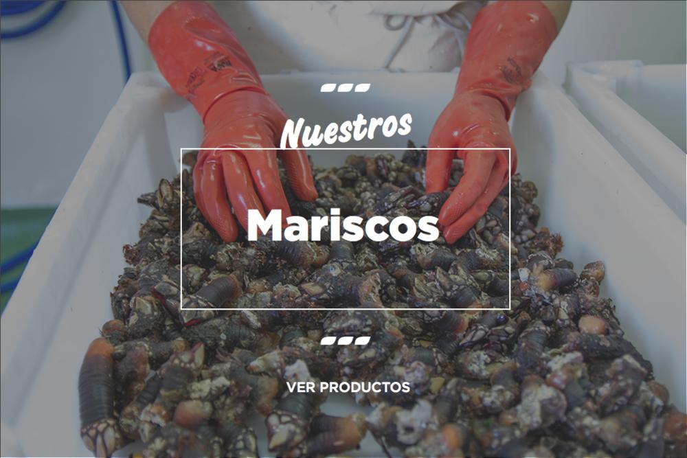 mayorista-marisco-galicia.jpg