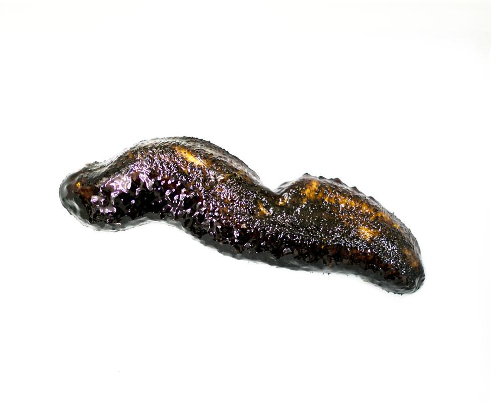 Pepino de Mar Negro