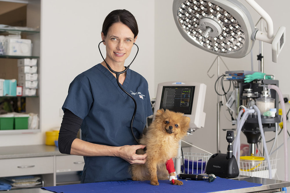 Veterinary Photography