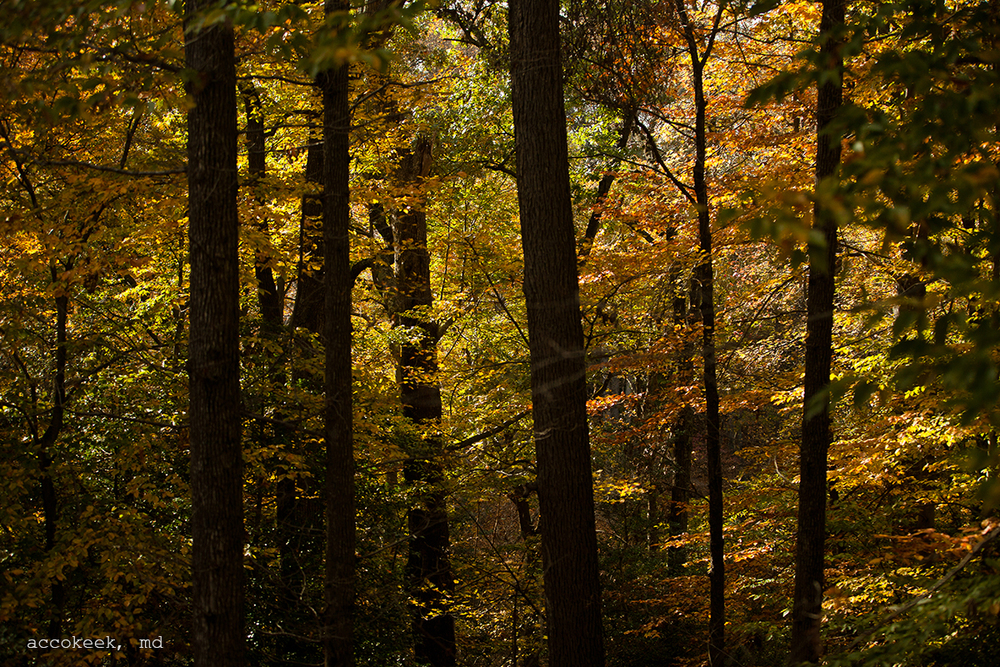 accokeek forest.jpg