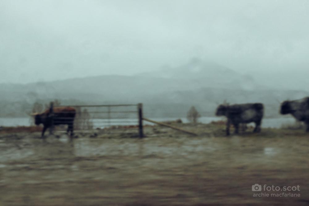 Road Home-35.jpg