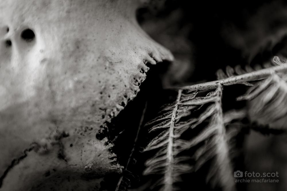 Bone-17.jpg