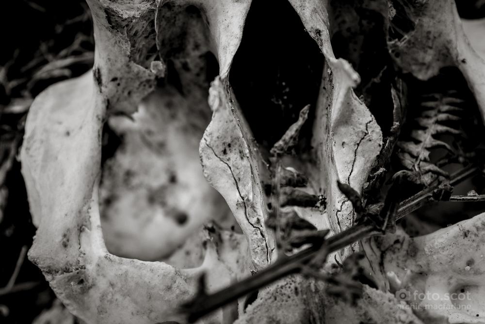 Bone-27.jpg