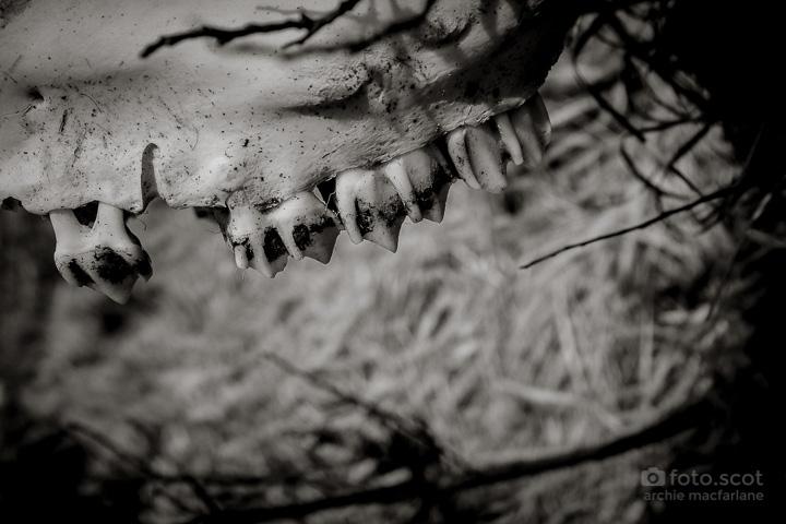 The Bone C-27.jpg