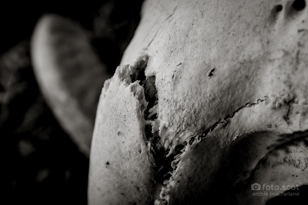 Bone-24.jpg