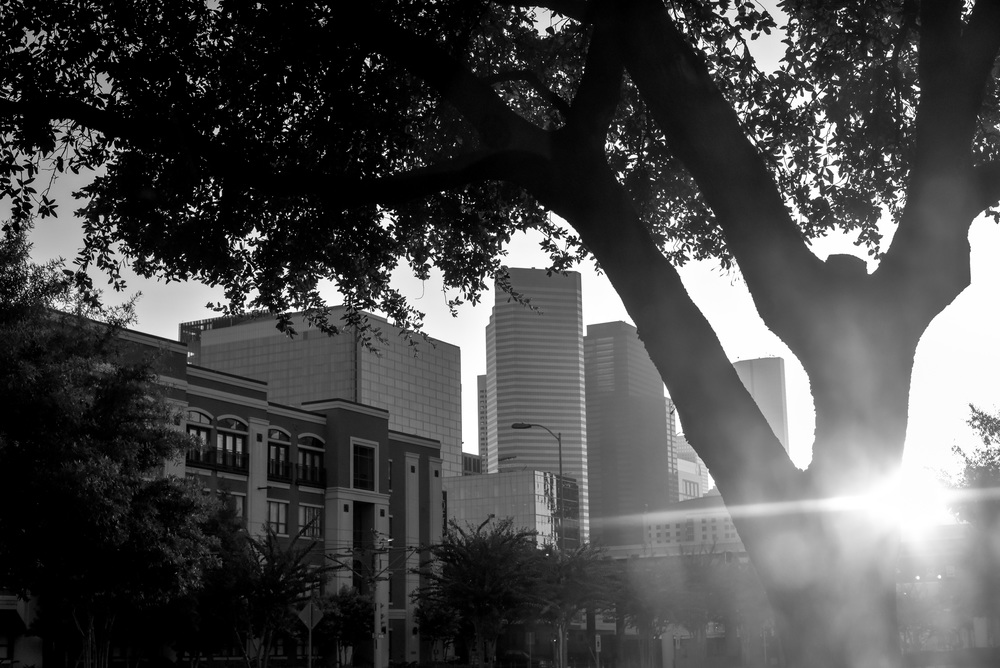 downtown houston through the trees