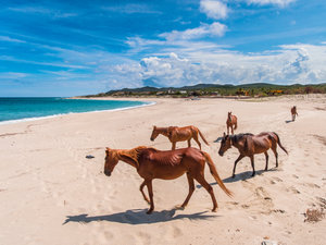 Horseback-riding $45/pp, Massage Therapist On-site $75/hr,  kayaking, paddle boarding & snorkeling included!