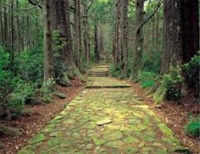 Free Forest Bath Meditation