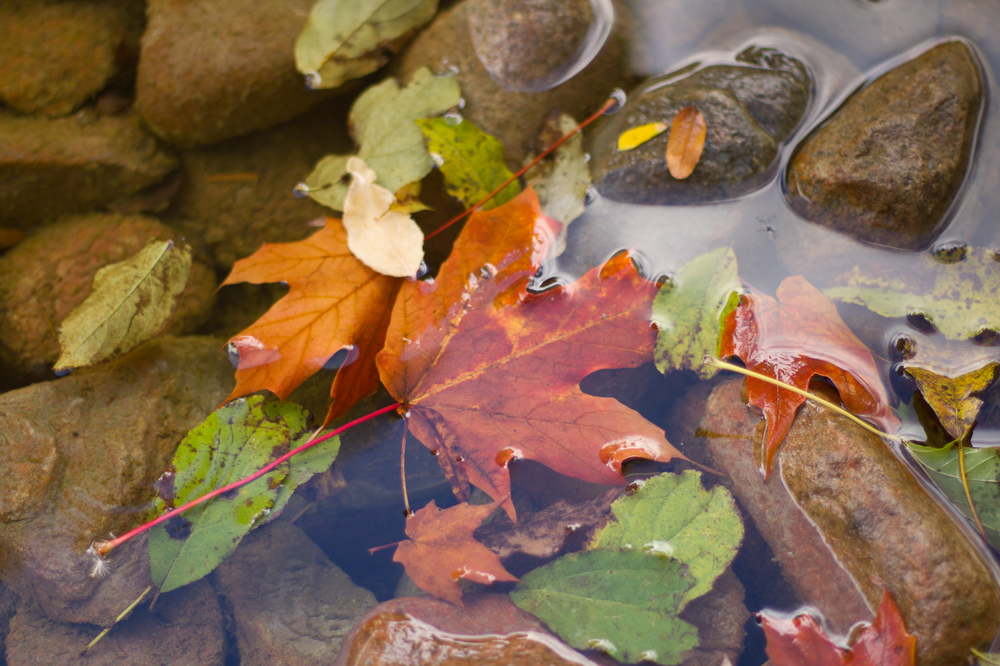 Leaves-0507.jpg