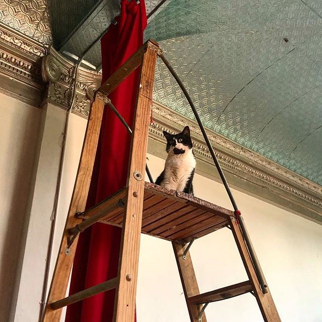 The dreamy Javier helping me install 16ft curtains this morning. . . . . . #installation #cat #ladder #drapes #heights