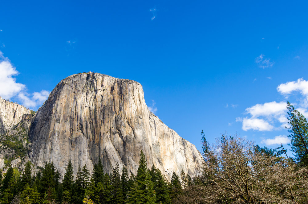 El Capitan looms large over the trees in Yosemite National Park California