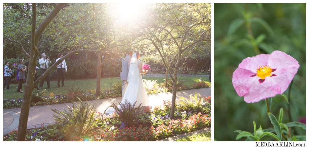 San Francisco Shakespeare Garden Wedding Elopement Photographer_0018