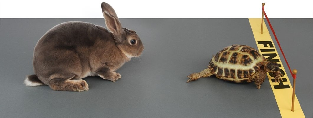 In the fable, the tortoise wins the race by slow, steady movement. In real life, slow-walking a crisis response is doomed to lose the race of telling your story.