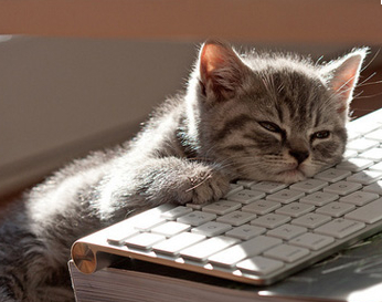 Don't be caught catnapping and miss a newsjacking moment than can turn into an earned media bonanza.