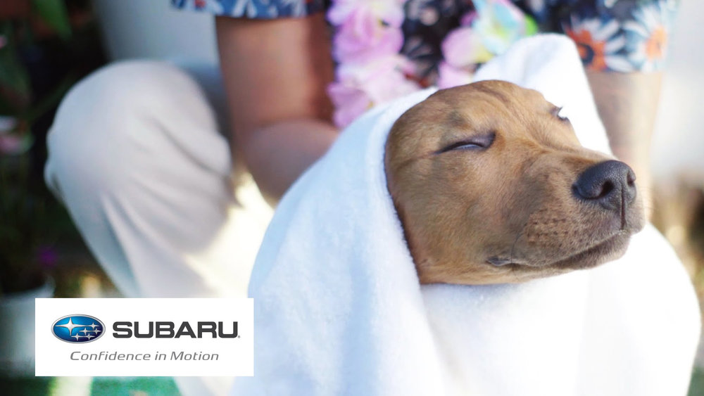 Who can't associate with the pure pleasure of a day at the spa – even if that satisfied smile is on the face of a dog.