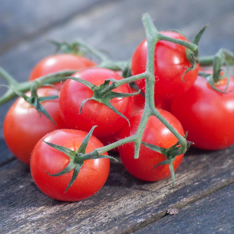 Tomatoes by Katie Vandyck.jpg