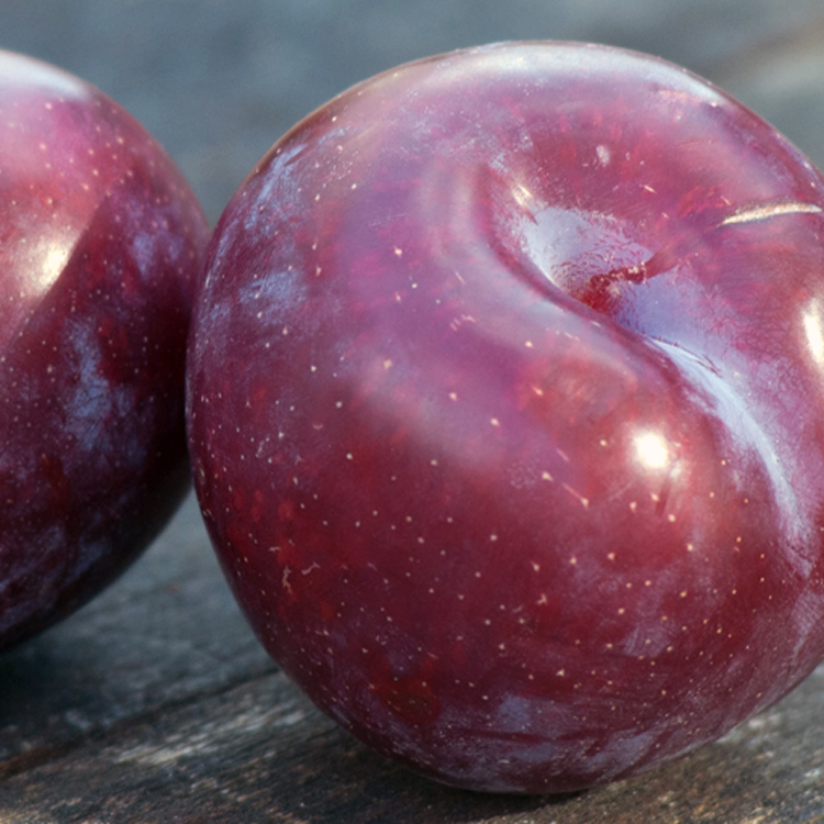 Plums by Katie Vandyck.jpg