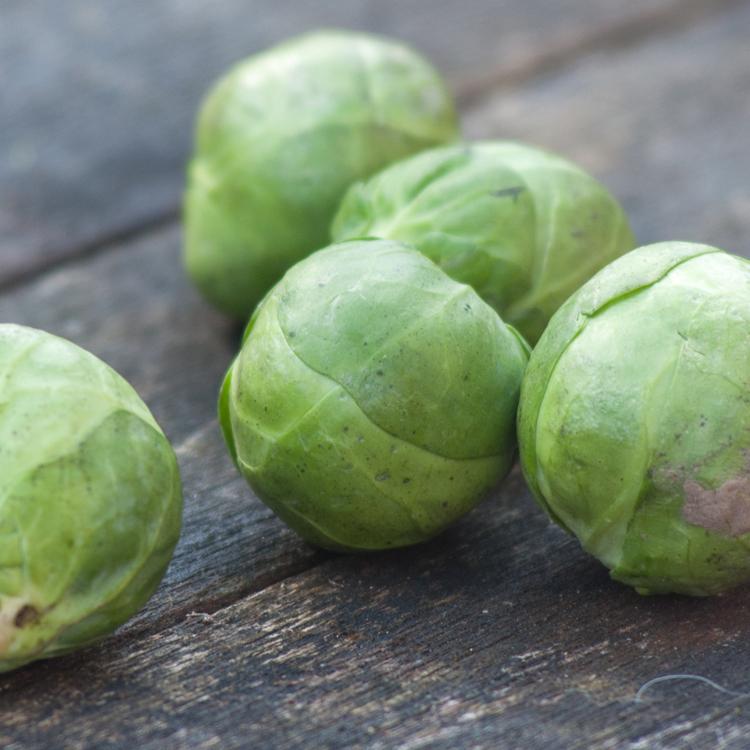 Sprouts by Katie Vandyck.jpg
