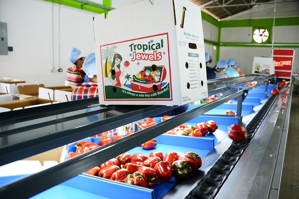 Weis-Buy Farms, Inc. red peppers go through cleaning processes in Dominican Republic before shipping with our Tropical Jewels label.