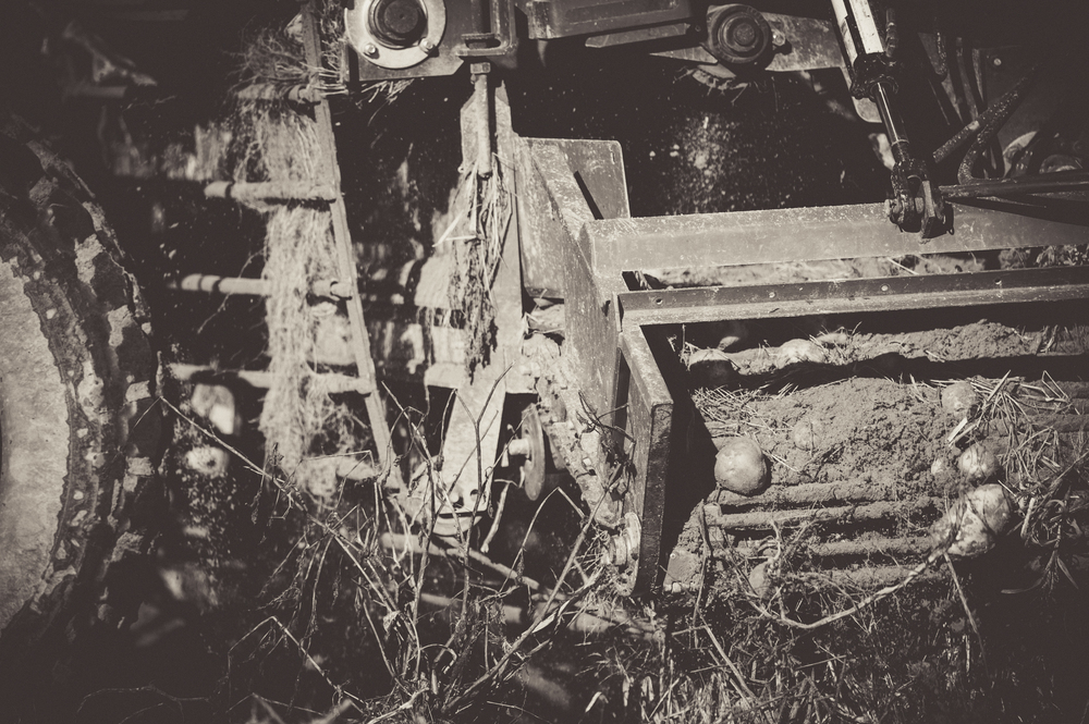 DustyLanesFarm_JeffAndersonPhotography-3747.JPG