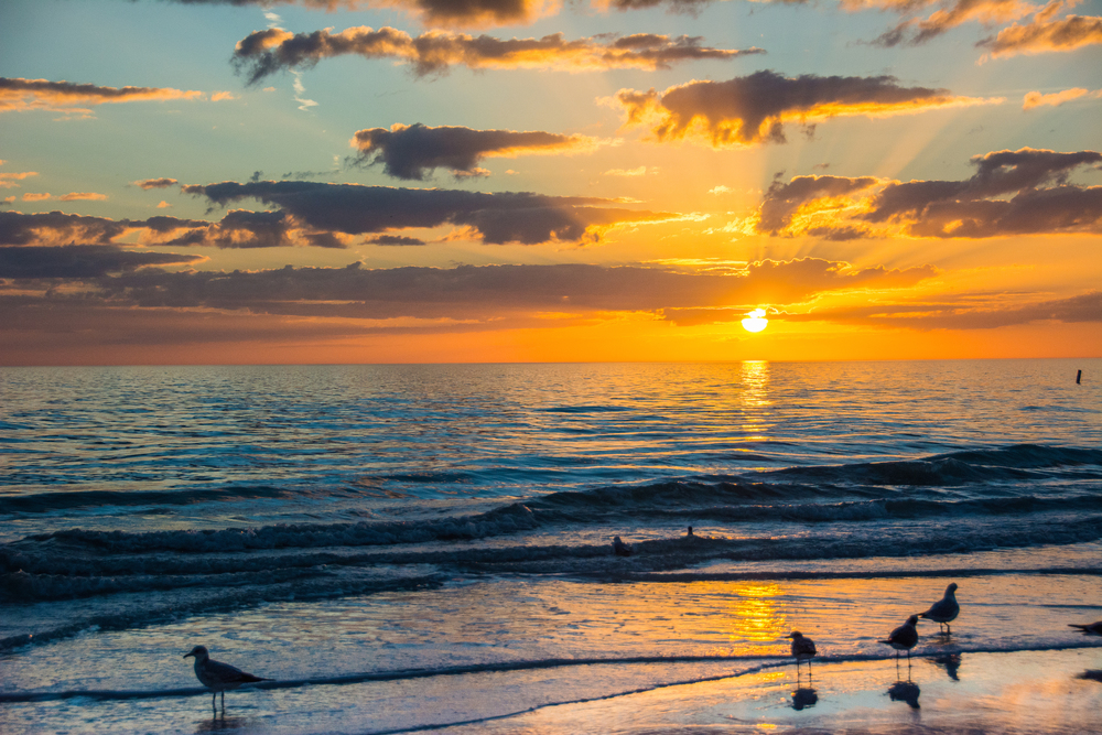 Seagulls Siesta Key Sunset - Leslie Brown