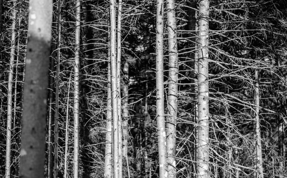 Winter Trees - Leslie Brown