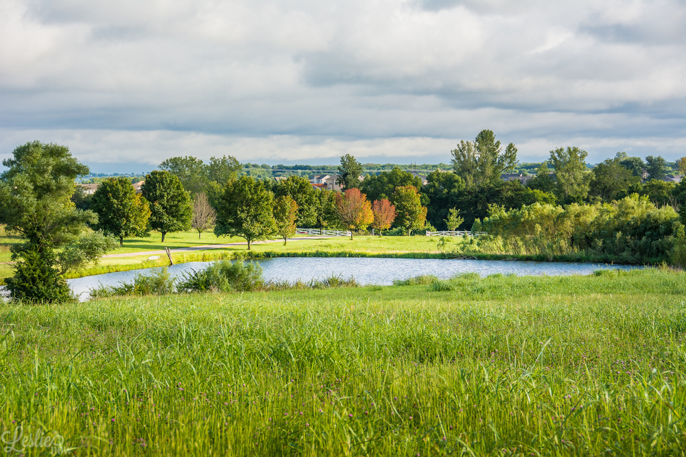 Kansas Field Scenery - Leslie Brown