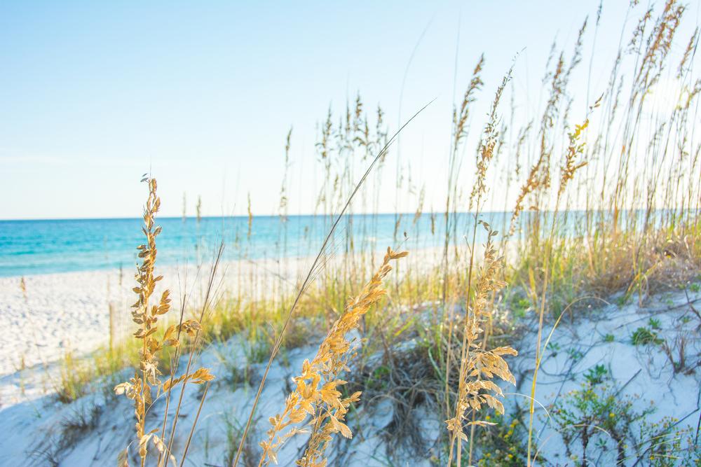 BeachPcola.jpg