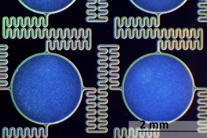 Flexible Lithium Ion Battery